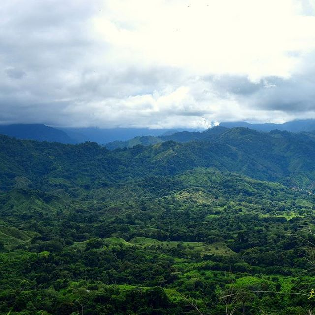 The never ending rolling hills of Colombia 🇨🇴 #Colombia #travel #Southamerica #Trees #hills #Mountains #hot #views #green #fun #love #travelpics #beautiful #incredible #amazing #instalike #instagood #travel #travelpics #instatravel #sky #like4like #instalike #picoftheday #photography #roundtheworld #worldtrip #wanderlust #clouds #colours