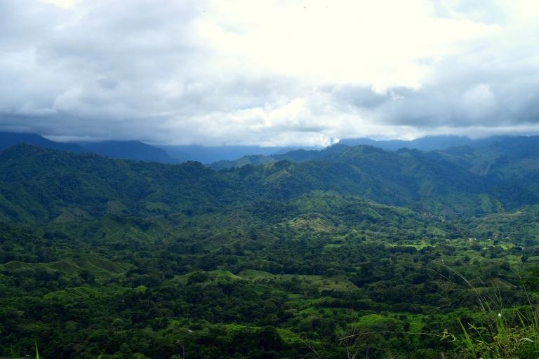 treescolombia